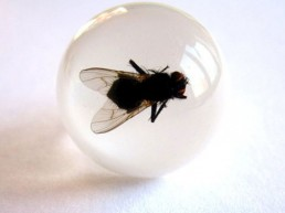 Fly preserved in clear resin